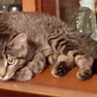 FOREVER HOME FOR KITTEN Wanted